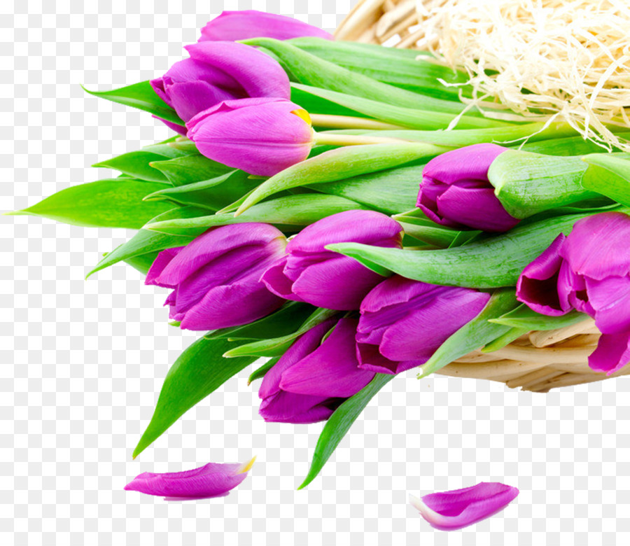 Flower bouquet Tulip Stock photography White - Purple tulips png ...