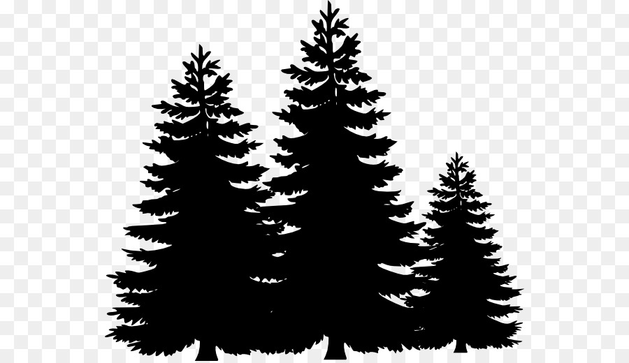 pine tree fir clip art black trees cliparts png download 600 517 rh kisspng com free pine trees clipart pine trees with snow clipart