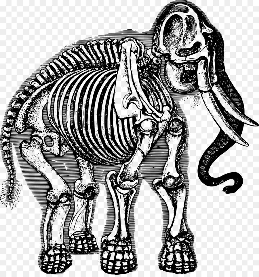 Mamut lanudo Elefante Esqueleto Clip art - Elefante png dibujo ...