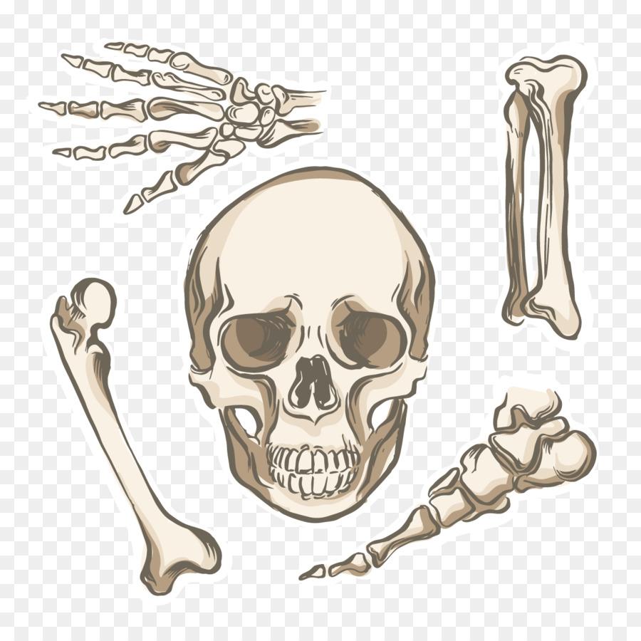 Hueso del esqueleto Humano cuerpo Humano anatomía Humana - Vector ...
