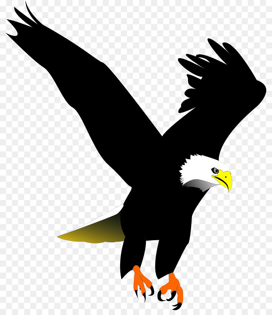 Águila calva de Aves Clip art - Negro de plumas de águila png dibujo ...