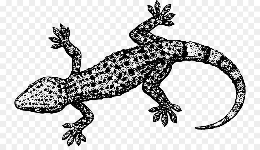 Lagarto Gecko Eidechse Reptiles Clip art - Libre De Lagarto Cliparts ...