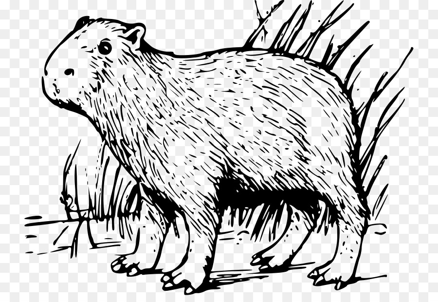 capybara rodent clip art porcupine coloring pages png download