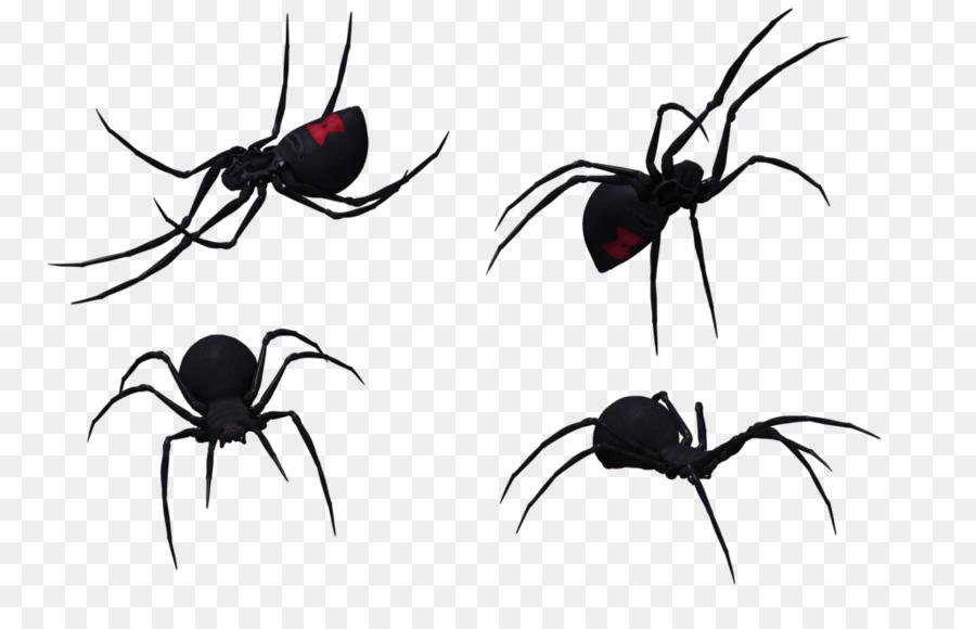 Araña Sur de la viuda negra Latrodectus hesperus Dibujo Clip art ...