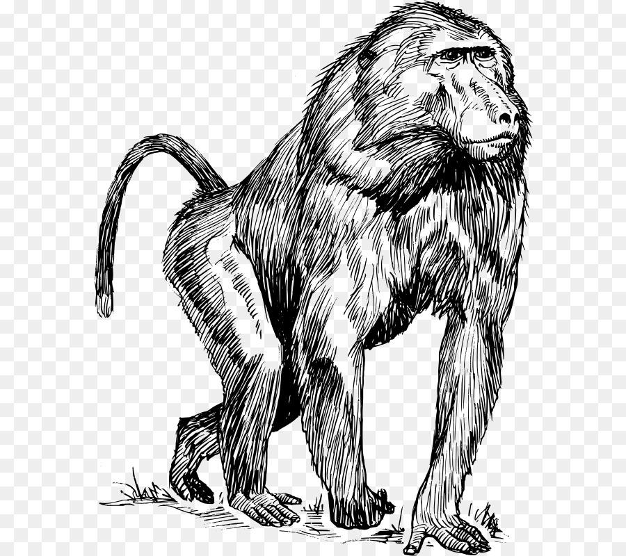 Mandrill Primado de babuinos Hamadryas Mono Chimpancé - Zoología ...