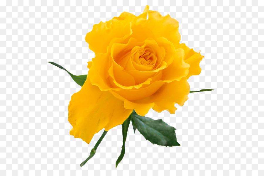 Rose Yellow Flower Bouquet Clip Art Yellow Rose Clipart 585587