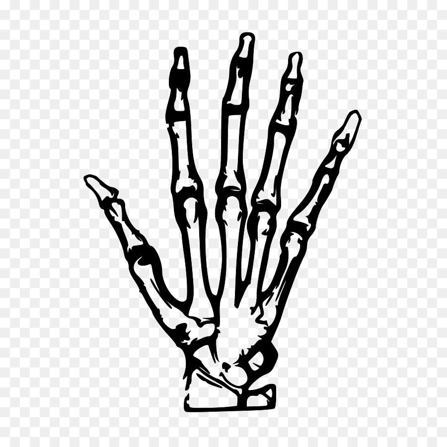 Esqueleto humano de la Mano de Clip art - Xray Clipart Formatos De ...