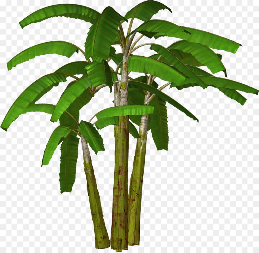 banana tree clip art banana coconut cliparts png download 1510 rh kisspng com Bunch of Bananas Clip Art banana tree clipart black and white