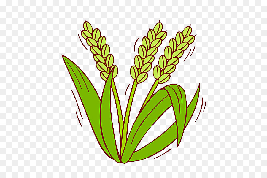 oryza sativa rice cereal clip art
