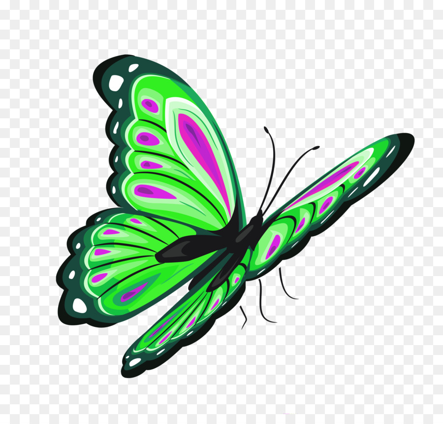 Butterfly green. Background png download free