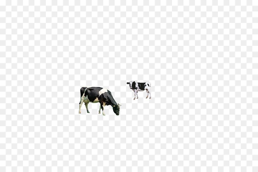 Dairy Cattle Milk Breakfast
