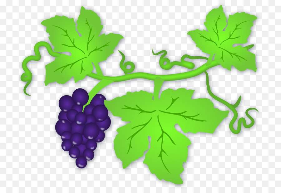 white wine common grape vine clip art pictures of grapes png rh kisspng com grapevine clip art border grape vine clip art free