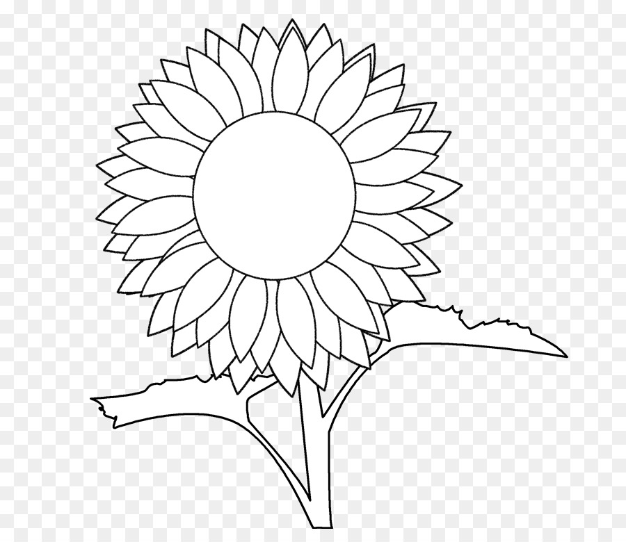Common Sunflower Coloring Book Drawing Greek Vase Template Png