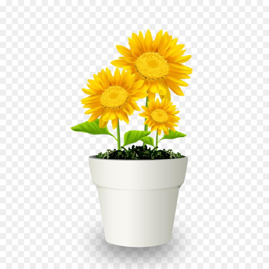 Chrysanthemum Flowerpot Bonsai Transvaal Daisy Potted