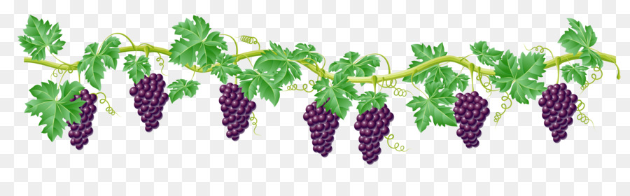common grape vine clip art vine cliparts transparent png download rh kisspng com grapevine clip art borders free free grapevine clipart borders