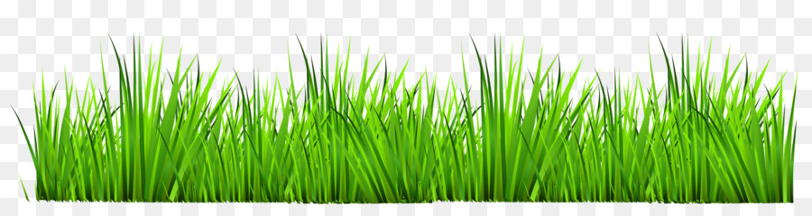 drawing royalty free photography clip art cliparts grass border rh kisspng com Grass Borders Clip Arts Cartoons Grass Border Clip Art Transparent