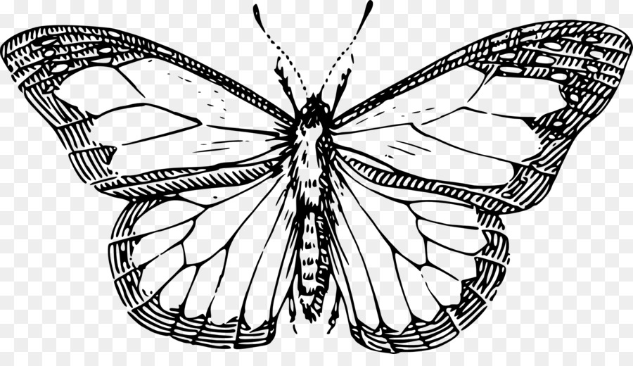 Butterfly insect drawing clip art line drawings of butterflies