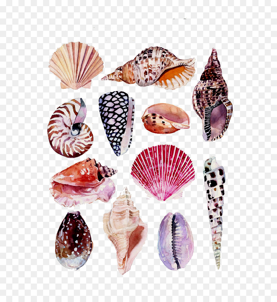 Marvelous Drawing Watercolor Painting Art Nature Illustration   Conch Shell Beach