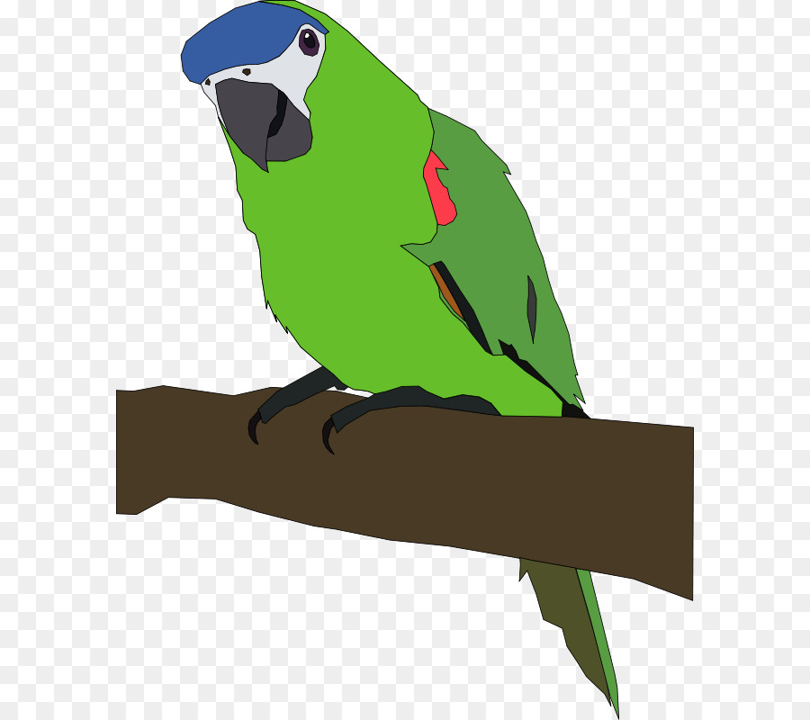 Amazon Beo Bird Clip Art Burung Beo Gambar Kartun Unduh Macaw