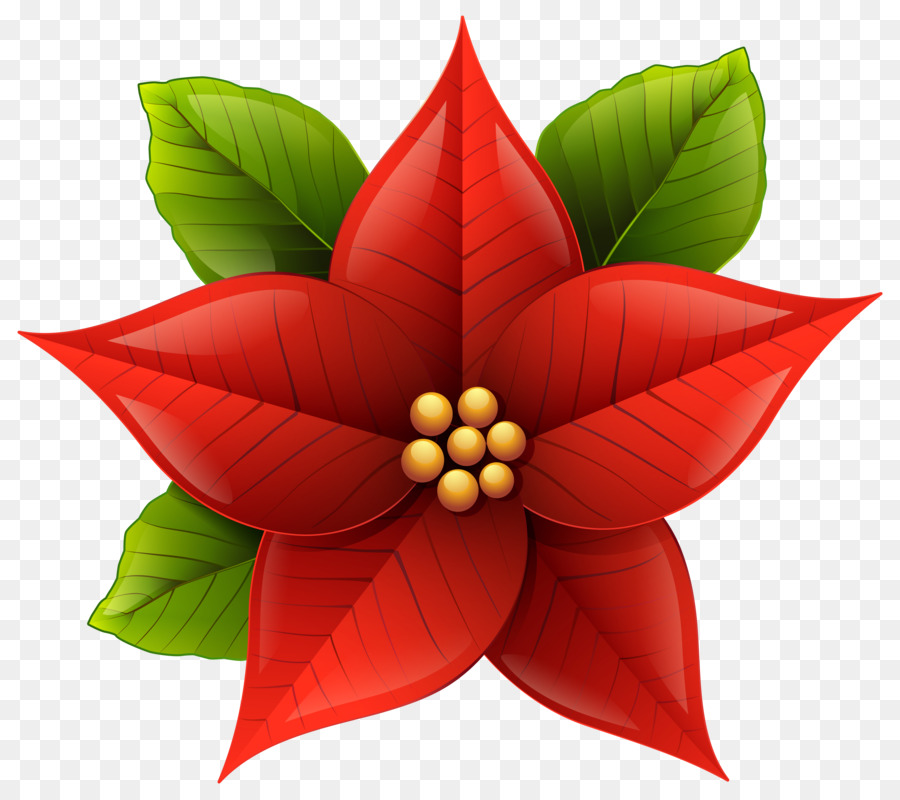 poinsettia christmas clip art poinsettia flower cliparts png