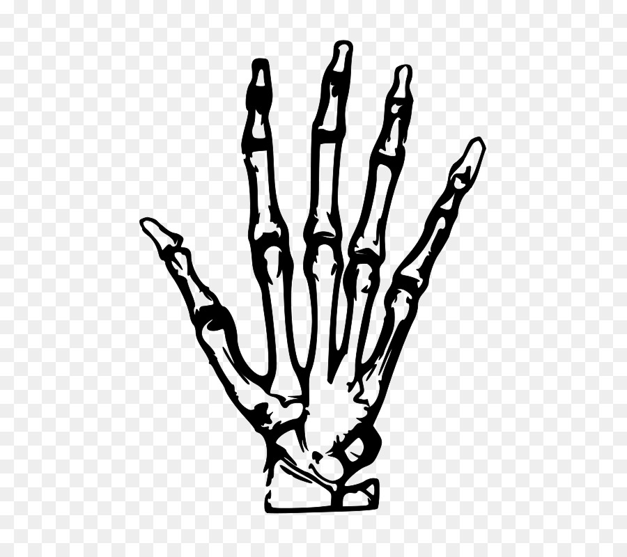 Human Skeleton Hand Bone Clip Art Simple Hand Painted Skeleton