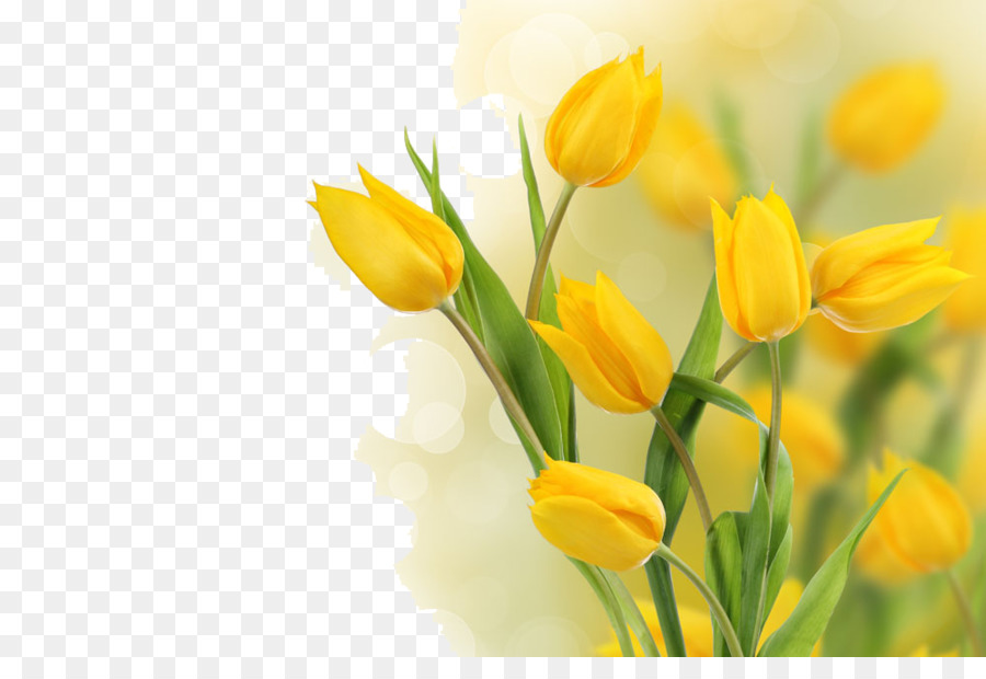 Flower yellow tulip stock photography bulb beautiful tulips png flower yellow tulip stock photography bulb beautiful tulips mightylinksfo