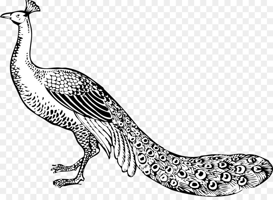 Burung Merak Hitam Dan Bulu Putih Klip Seni Merak Cliparts Unduh