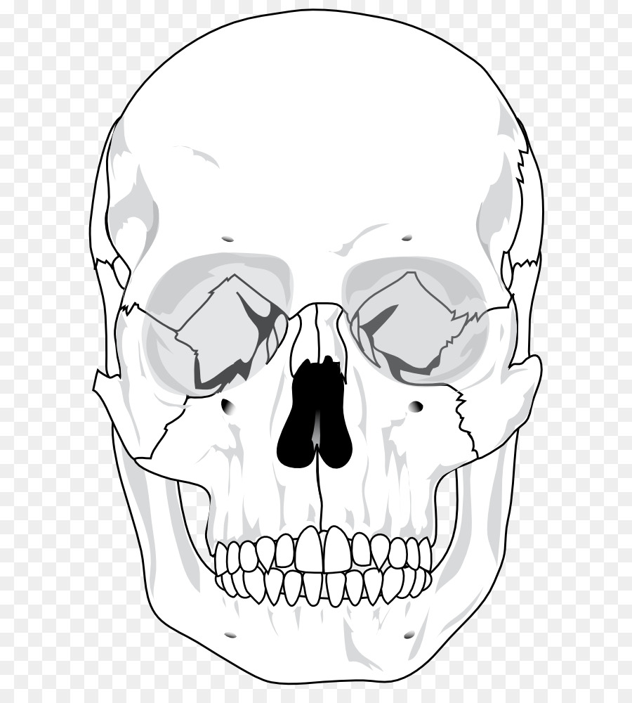 skull human skeleton anatomy bone diagram skull heads pictures png rh kisspng com diagram of a dog skull diagram of skull muscles