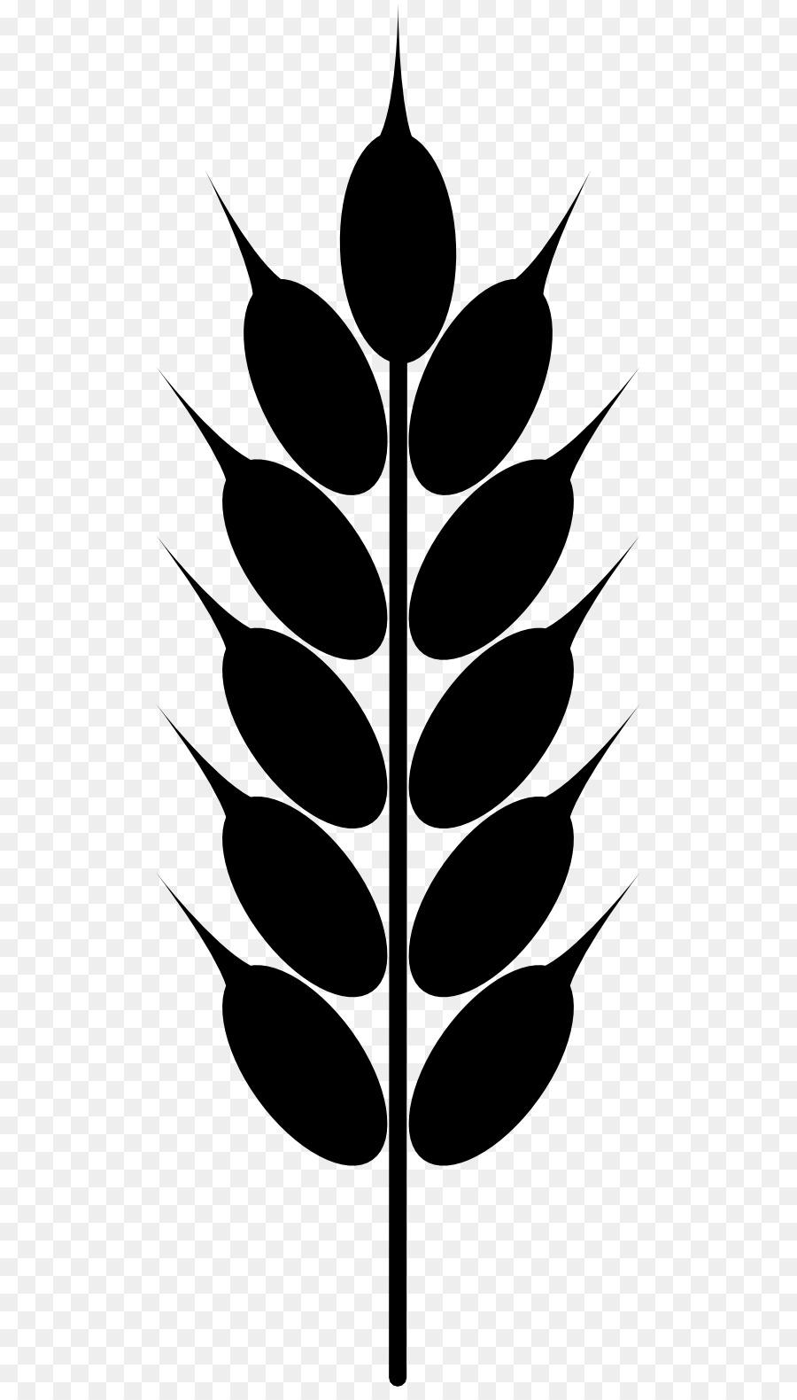 wheat ear grain clip art wheat cliparts png download 555 1569 rh kisspng com grain clipart png grain clipart black and white