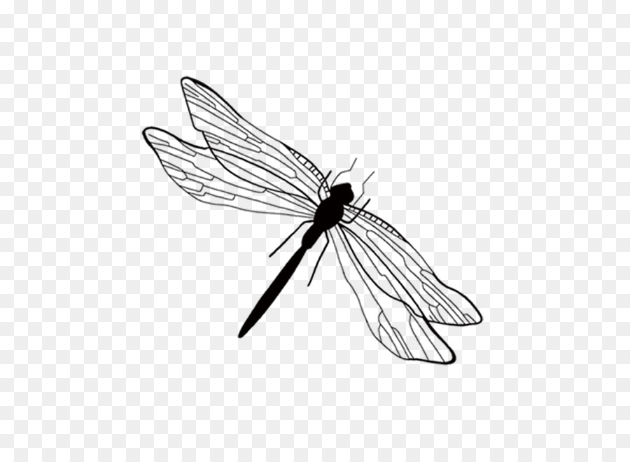 Insect Ink Wash Painting Black And White White Dragonfly Diagram
