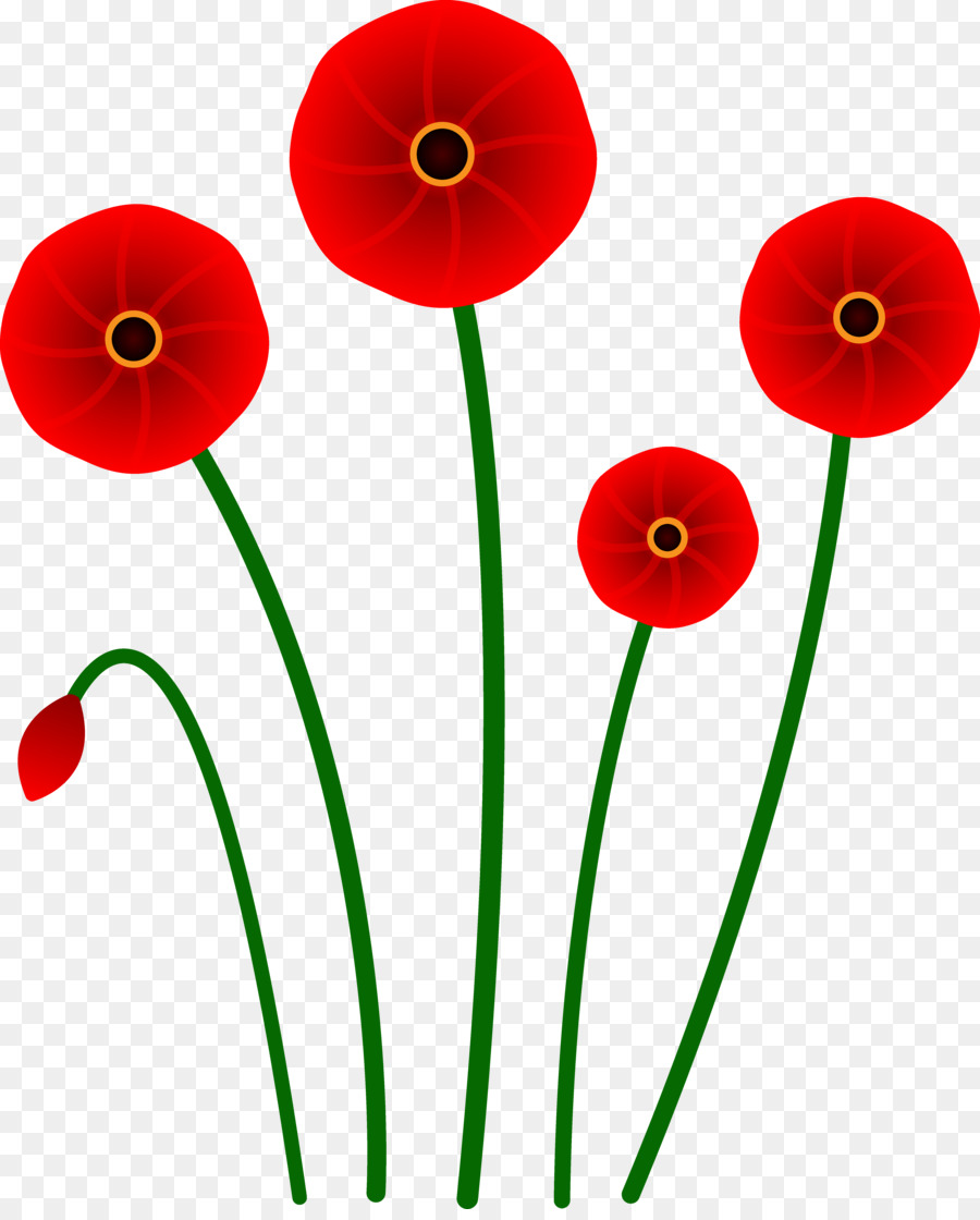 Poppy Flower Red Clip Art Cinnabon Cliparts Png Download 5560