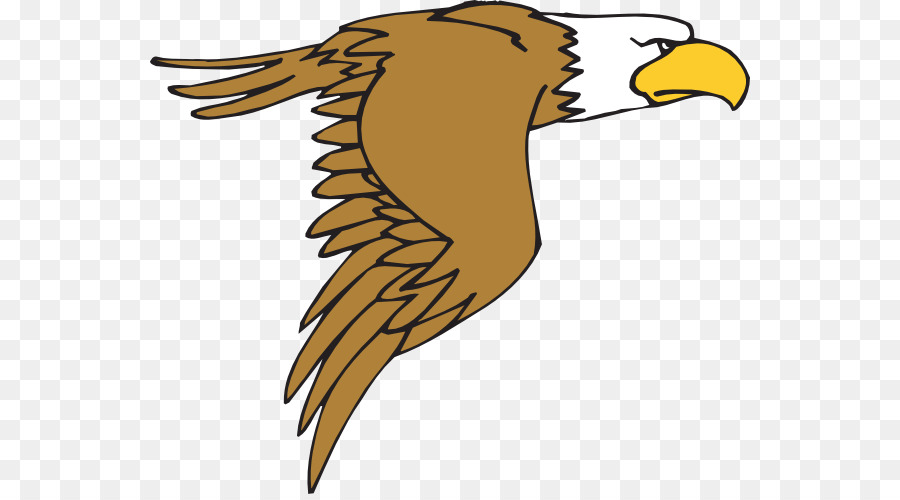 bald eagle bird cartoon clip art cute hawk cliparts png