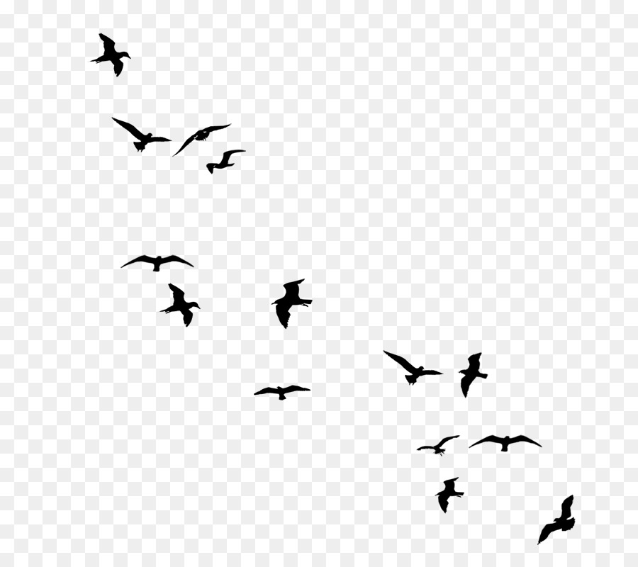 Black and white flying bird clipart
