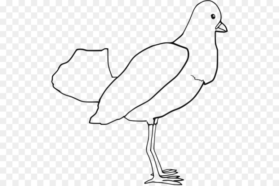Loro pájaro libro para Colorear, Dibujo de Clip art - Esquema De ...