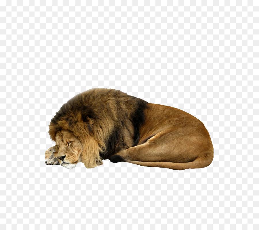 различного спасибо лев картинки свекла остынет