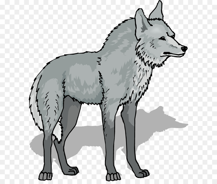 Gray wolf. Cartoon png download free