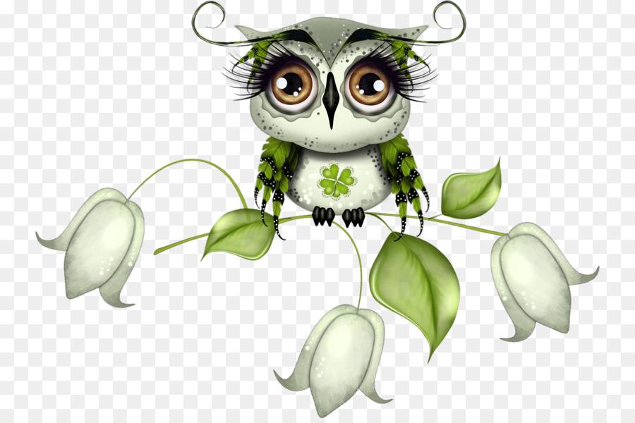 little owl bird drawing big eyes owl png download 800 593