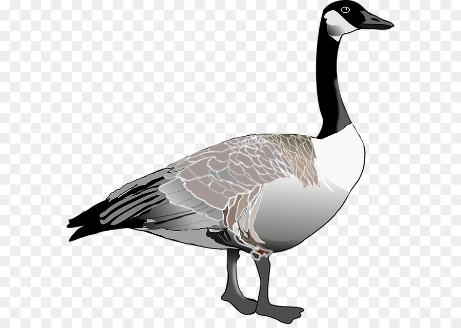 Ganso de canadá Ganso de Canadá de las Aves Clip art - Diseño ...