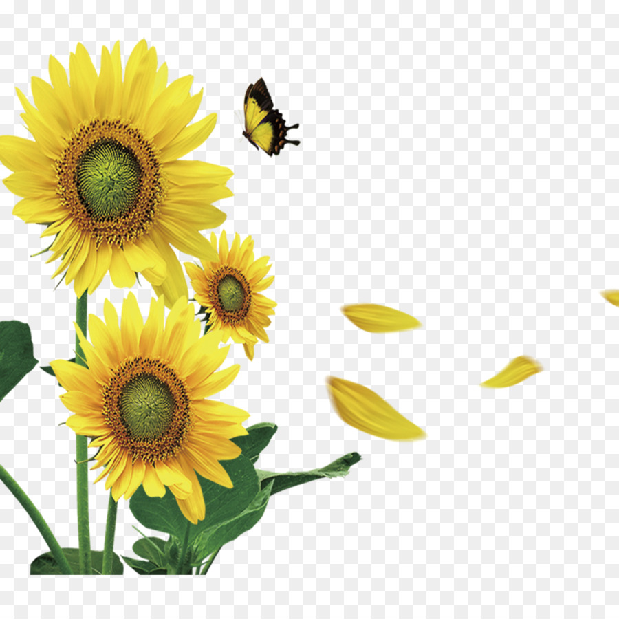 Blackjack Butterfly Payment Game - Yellow sunflower butterfly ...