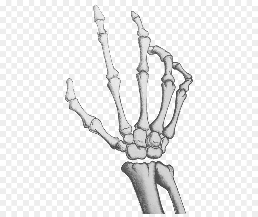 Human skeleton Hand Drawing Bone - Palm skeleton png download - 473 ...