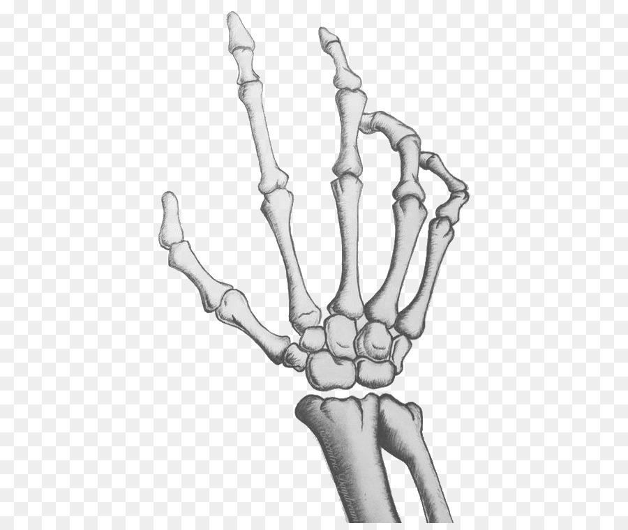 Human Skeleton Hand Drawing Bone Palm Skeleton Png Download 473