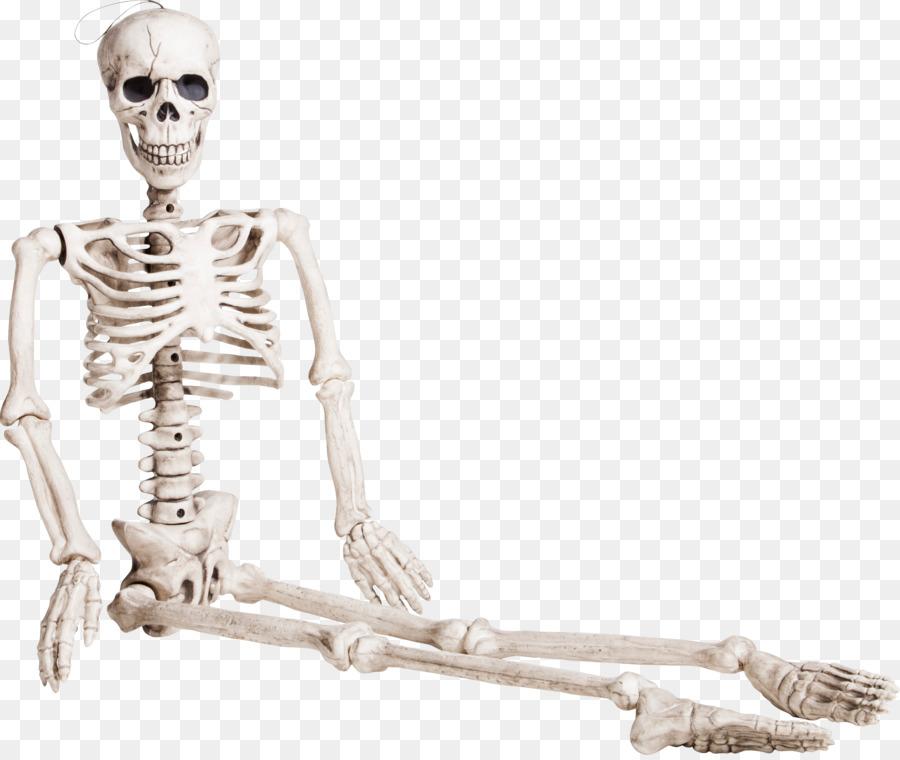 Human skeleton Bone Homo sapiens - Seated skeleton png download ...