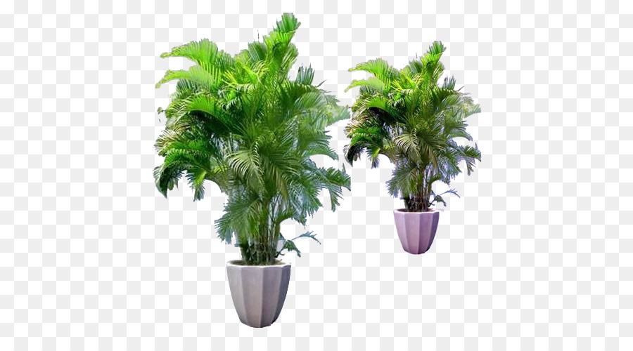 Bambus Blumentopf Zimmerpflanze Areca Palm Kleine Bambus Png