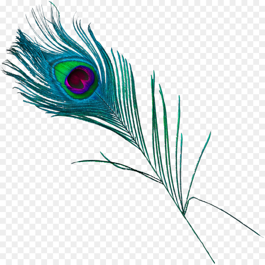 Feather peafowl beautiful peacock feathers 2681 2680 transprent png free download material - Beautiful peacock feather ...