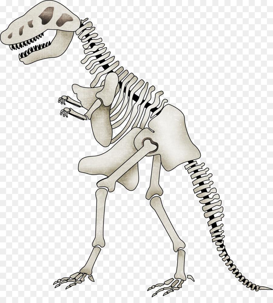 Tyrannosaurus Spinosaurus Esqueleto de Dinosaurio Clip art - Dibujos ...