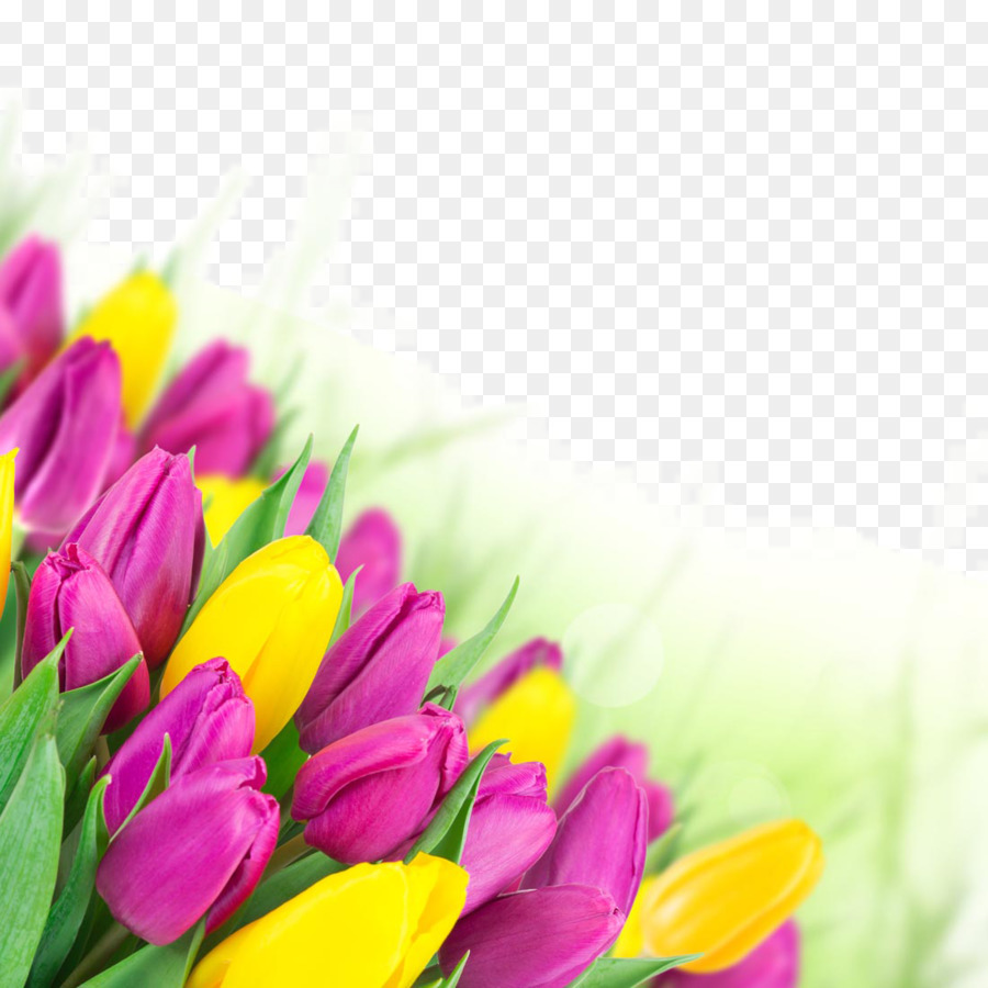 Tulip Flower Bouquet Pink Wallpaper Beautiful Tulip Flowers Png