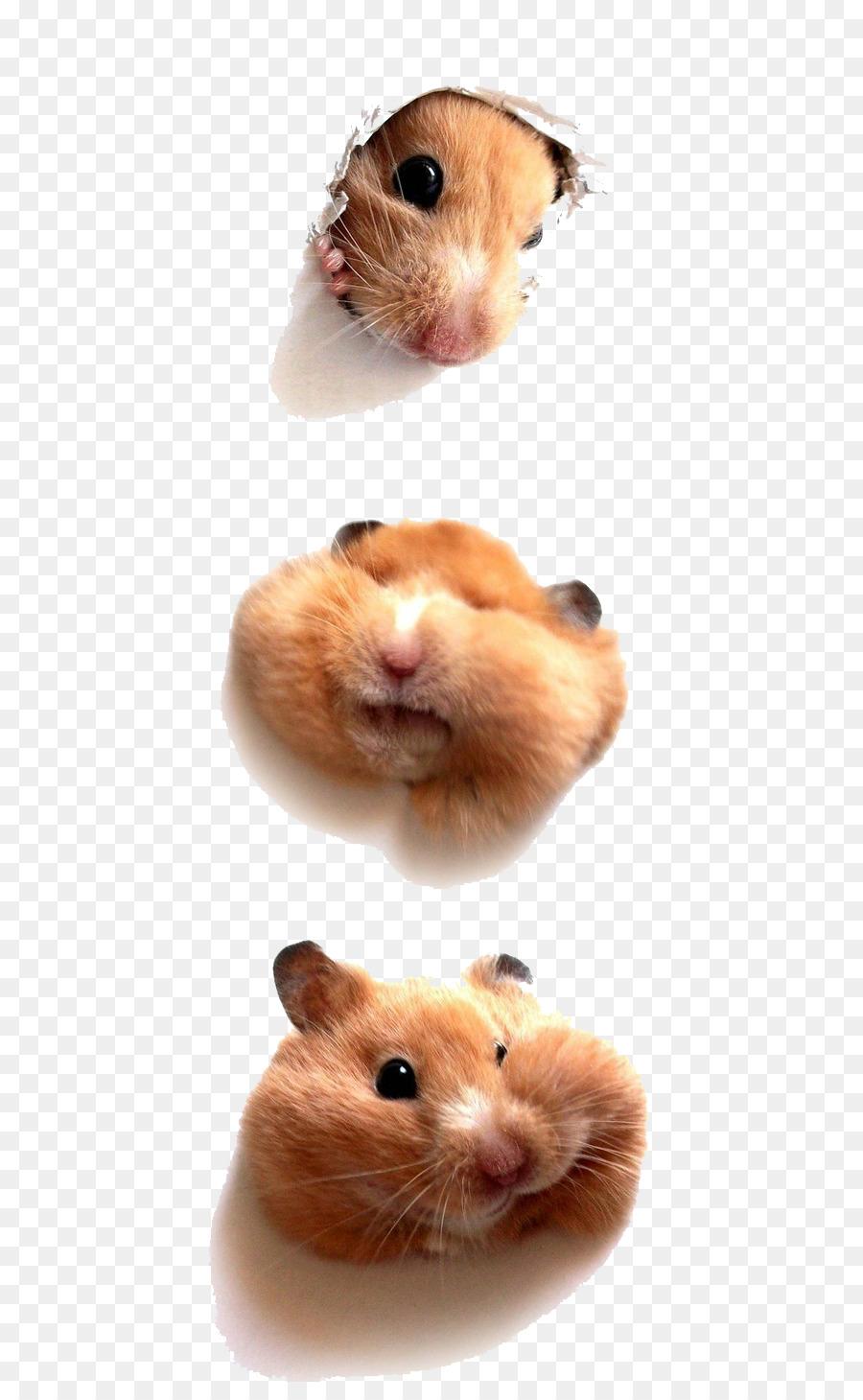 Hamster Bär Kätzchen Welpen Nager Süße Maus Png Herunterladen