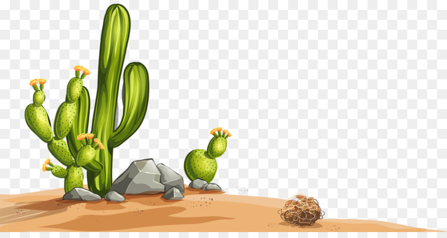 Desert Plant png download - 1024*533 - Free Transparent Desert png