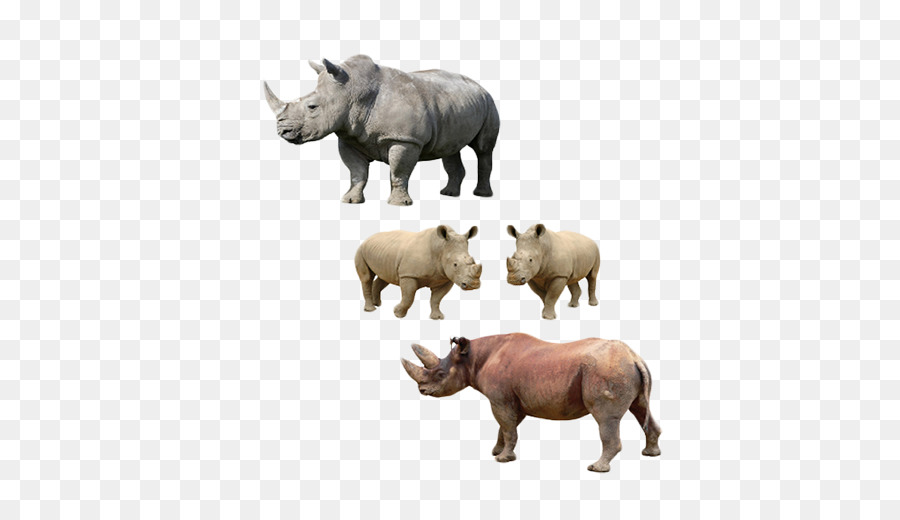 Rhinoceros Snout png download - 639*520 - Free Transparent