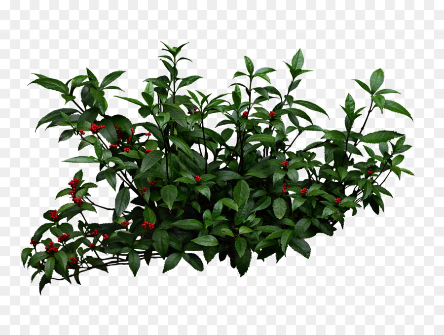 Strauch Garten Pixel Clip Art Pflanzen Sträucher Png Herunterladen